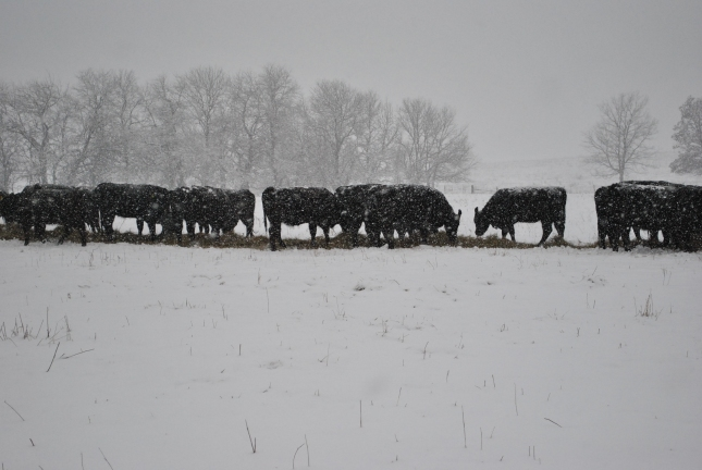 December 2012 142