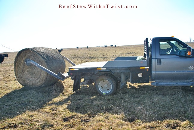 Feeding Hay with Truck